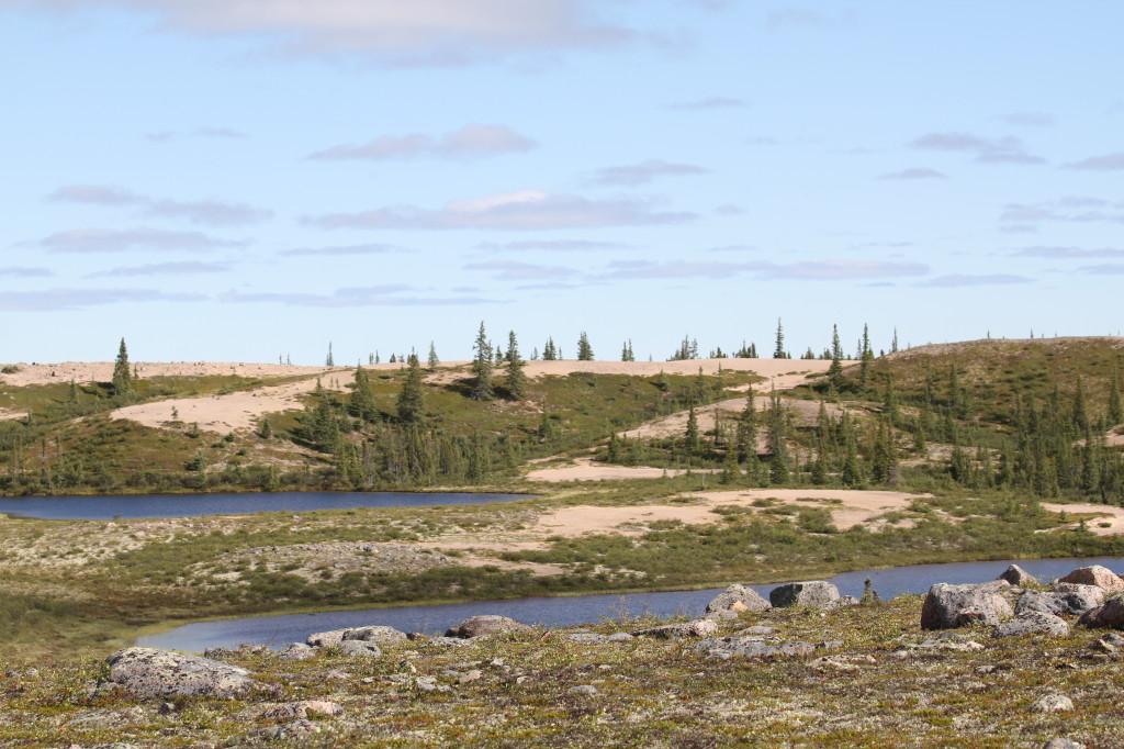 Naturen her består av sand, vann og granskog