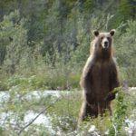 Denne nærgående grizzlyen fikk de både film og bilder av
